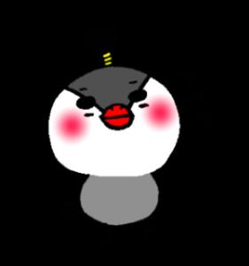 ちょんまげ文鳥