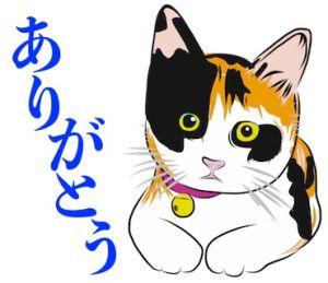 カワイイ三毛猫ちゃん