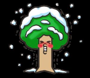 崖の上の木
