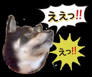 黒柴ノアール2
