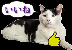 ぶち猫たーや君01