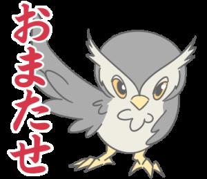 ハロー!フクロウです!(静止画)
