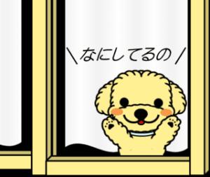 """トイプー""""みるくちゃん""""の日常"""