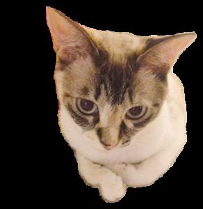 きょうだい猫 タクラとゴビ