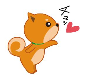 柴犬「ムサシ」4