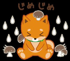 柴犬「ムサシ」8