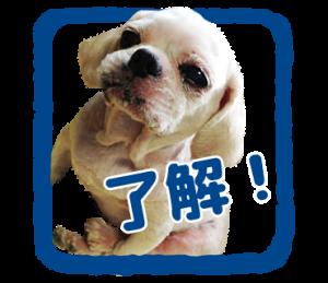 癒し犬の「了解」スタンプ