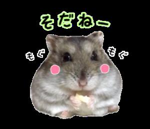 ジャンガリアンハムスターのちびちゃん3