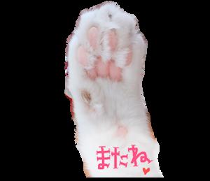 白猫ももつぁん