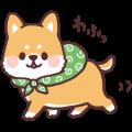 ころころ柴犬2